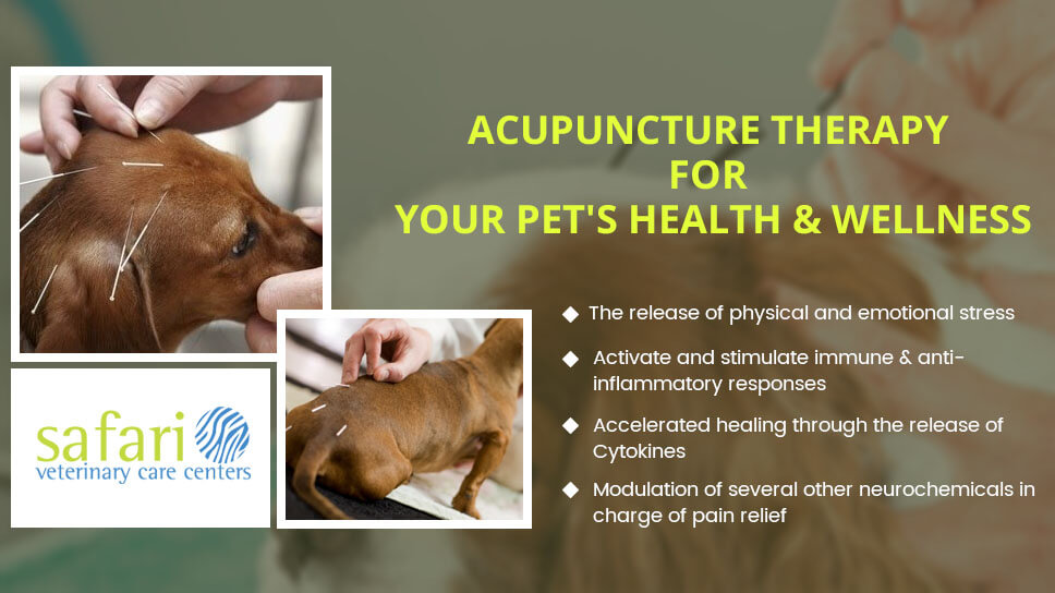 how-acupuncture-therapy-works-on-the-pets-health-and-wellness