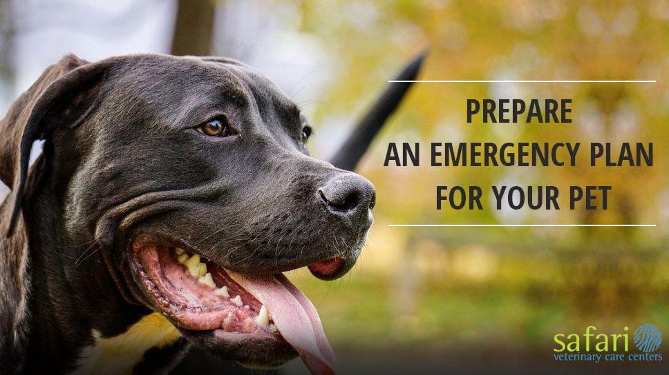 How to prepare an Emergency Plan for your pet