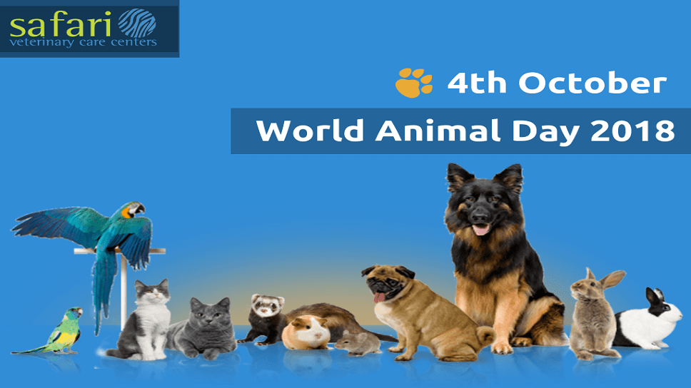 the-world-animal-day-2018