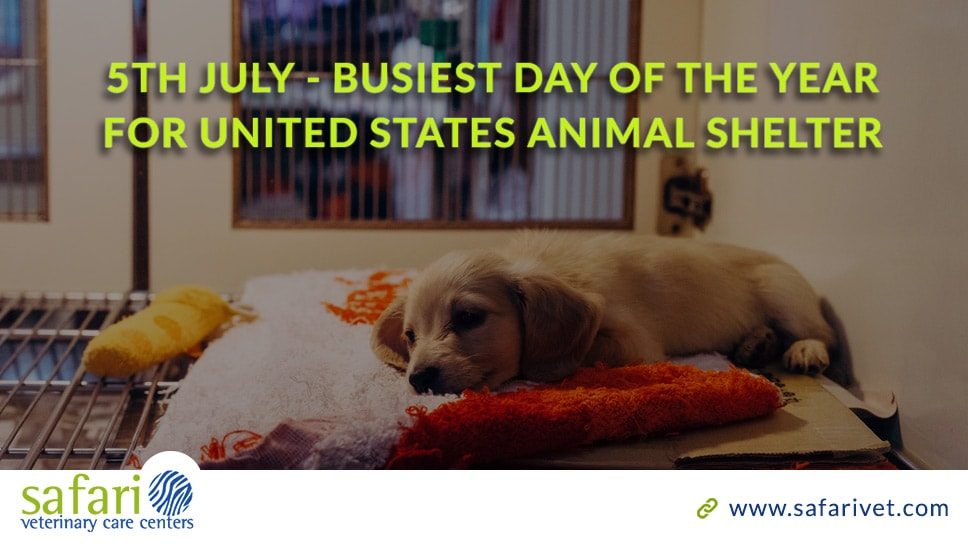 5th-july-busiest-day-of-the-year-for-united-states-animal-shelter