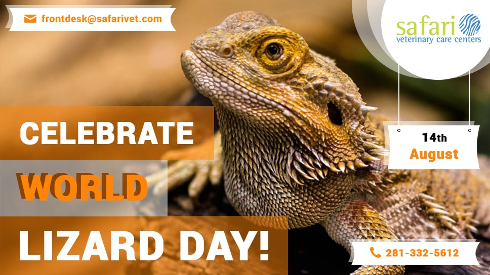 14th-august-celebrate-world-lizard-day