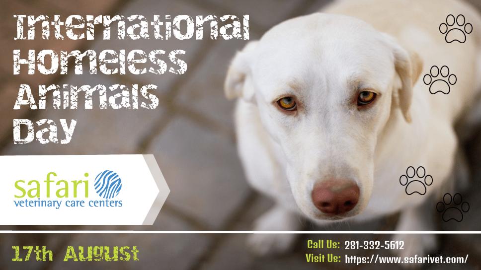 17th-august-international-homeless-animals-day