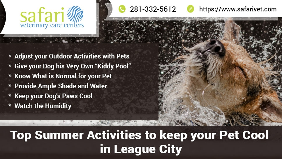 top-summer-activities-to-keep-your-pet-cool-in-league-city