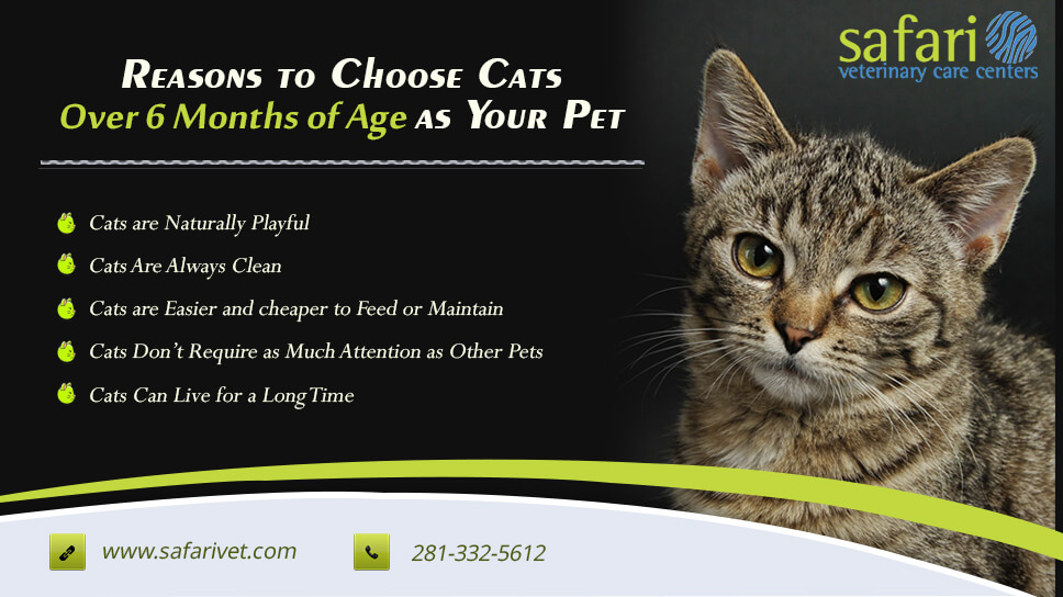 reasons-to-choose-cats-over-6-months-of-age-as-your-pet