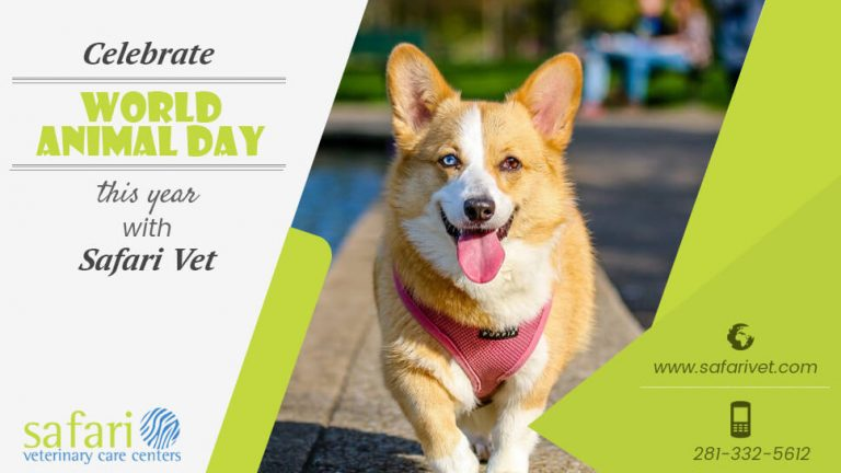 celebrate-world-animal-day-this-year-with-safari-vet