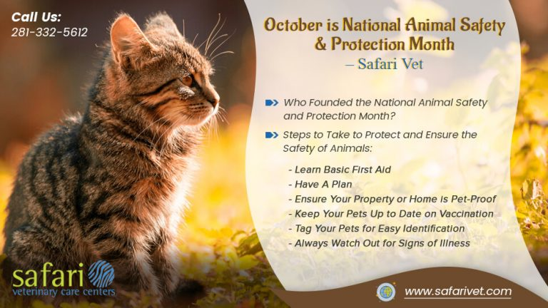 october-is-national-animal-safety-and-protection-month