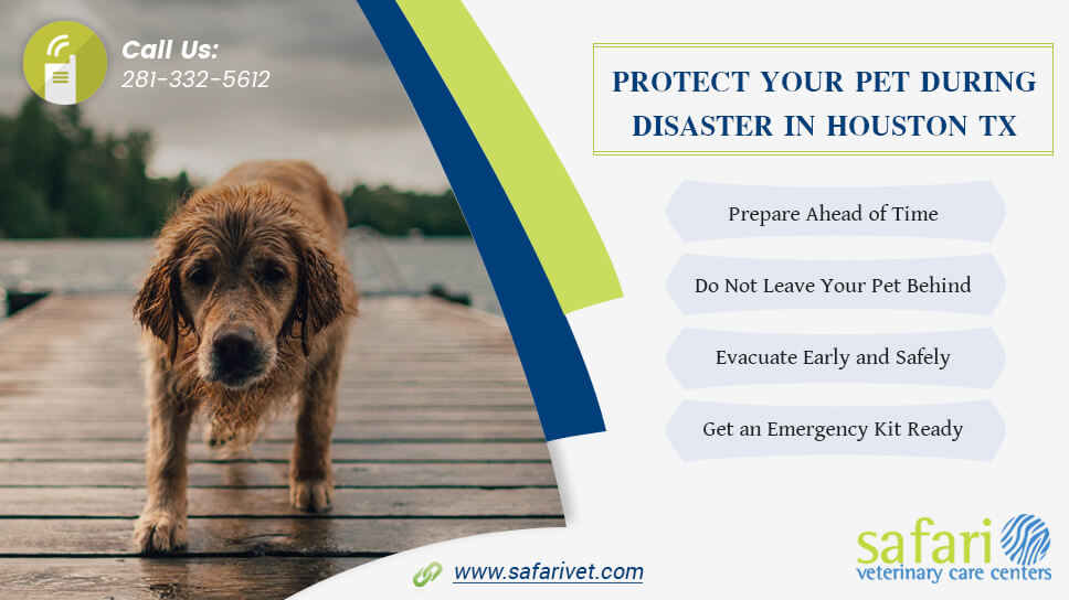 protect-your-pet-during-disaster-in-houston-tx