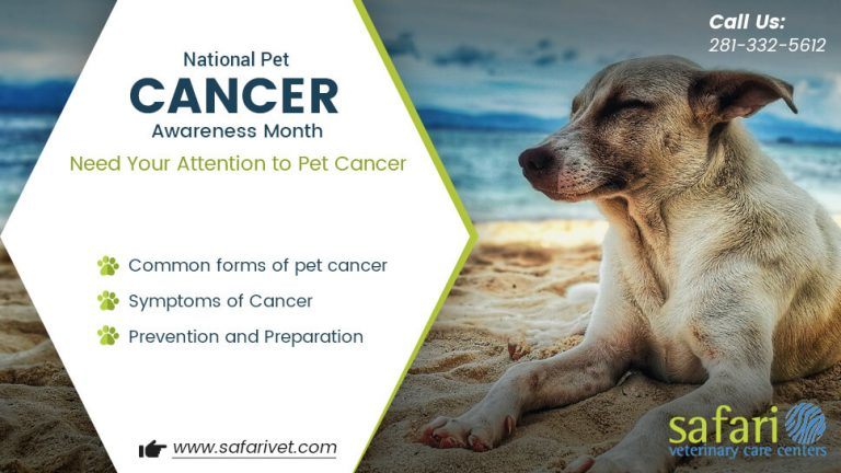 national-pet-cancer-awareness-month-need-your-attention-to-pet-cancer
