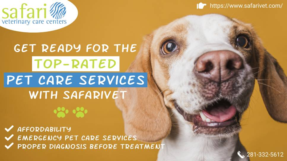 get-ready-for-the-top-rated-pet-care-services-with-safarivet