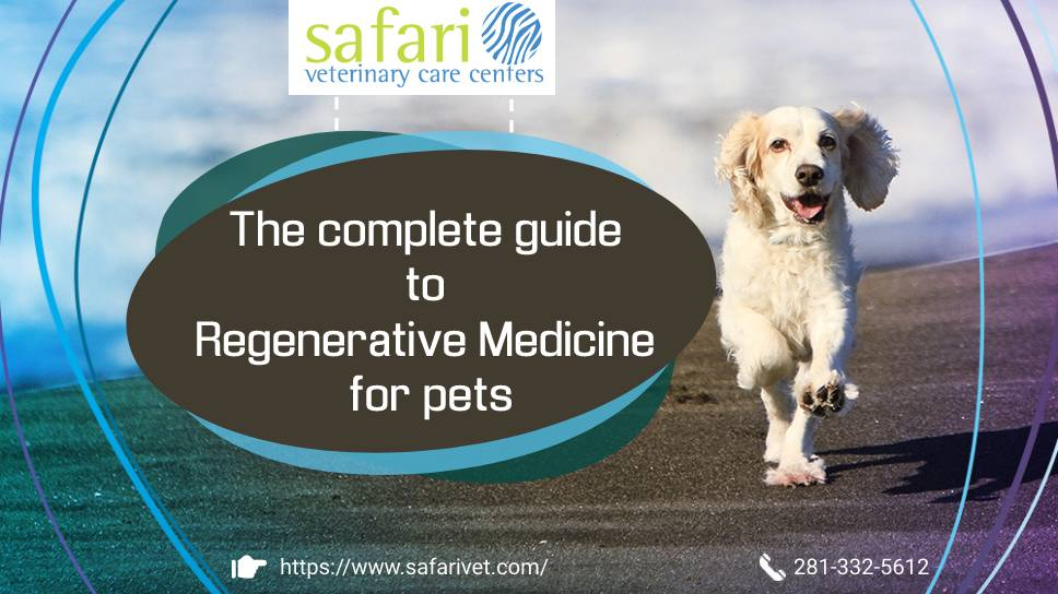 safarivet-the-complete-guide-to-regenerative-medicine-for-pets