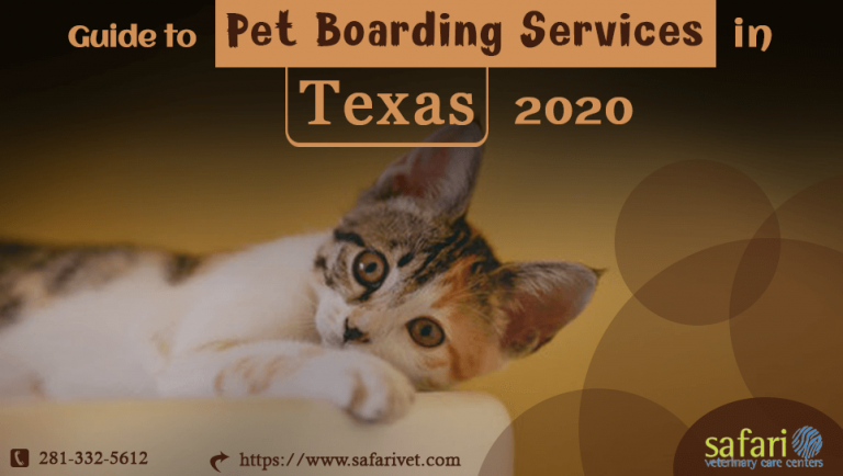 guide-to-pet-boarding-services-in-texas-2020