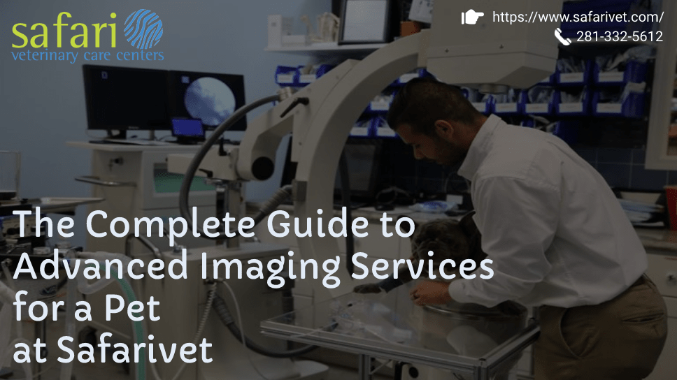 the-complete-guide-to-advanced-imaging-services-for-a-pet-at-safarivet