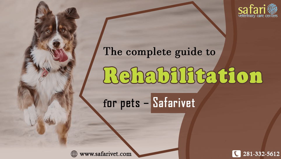 the-complete-guide-to-rehabilitation-for-pets-safarivet