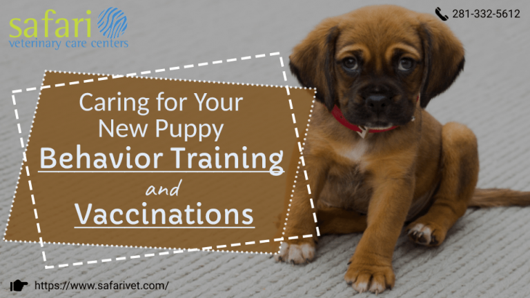 caring-for-your-new-puppy-behavior-training-and-vaccinations