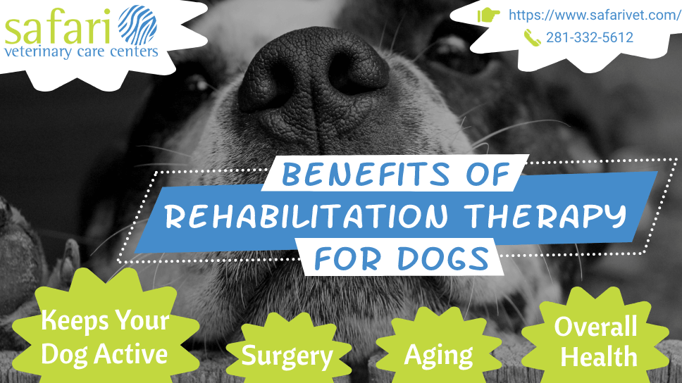 benefits-of-rehabilitation-therapy-for-dogs
