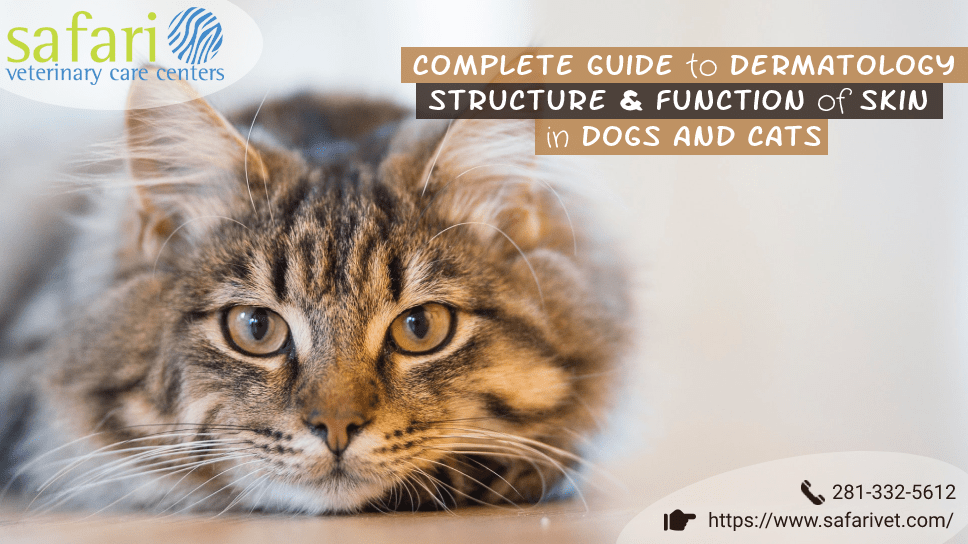complete-guide-to-dermatology-structure-function-of-skin-in-dogs-and-cats