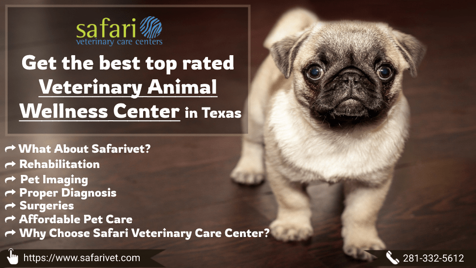 get-the-best-top-rated-veterinary-animal-wellness-center-in-texas