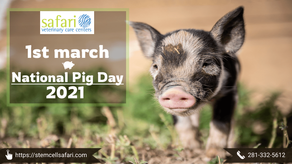 1st-march-national-pig-day-2021