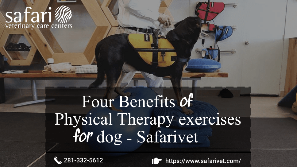 four-benefits-of-physical-therapy-exercises-for-dog-safarivet