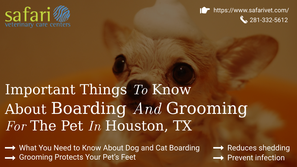 important-things-to-know-about-boarding-and-grooming-for-the-pet-in-houston-tx
