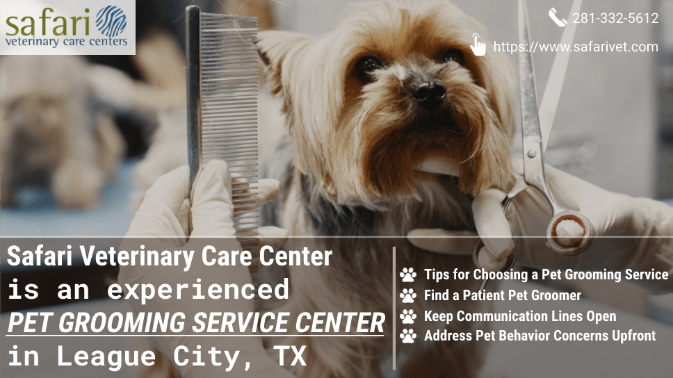 safari-veterinary-care-center-is-an-experienced-pet-grooming-service-center-in-league-city-tx