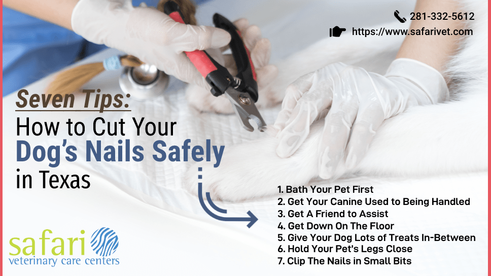 seven-tips-how-to-cut-your-dogs-nails-safely-in-texas