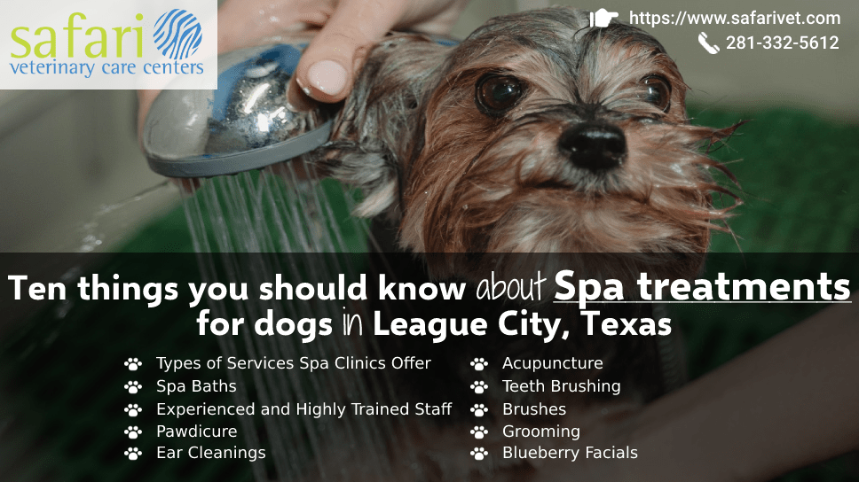 ten-things-you-should-know-about-spa-treatments-for-dogs-in-league-city-texas
