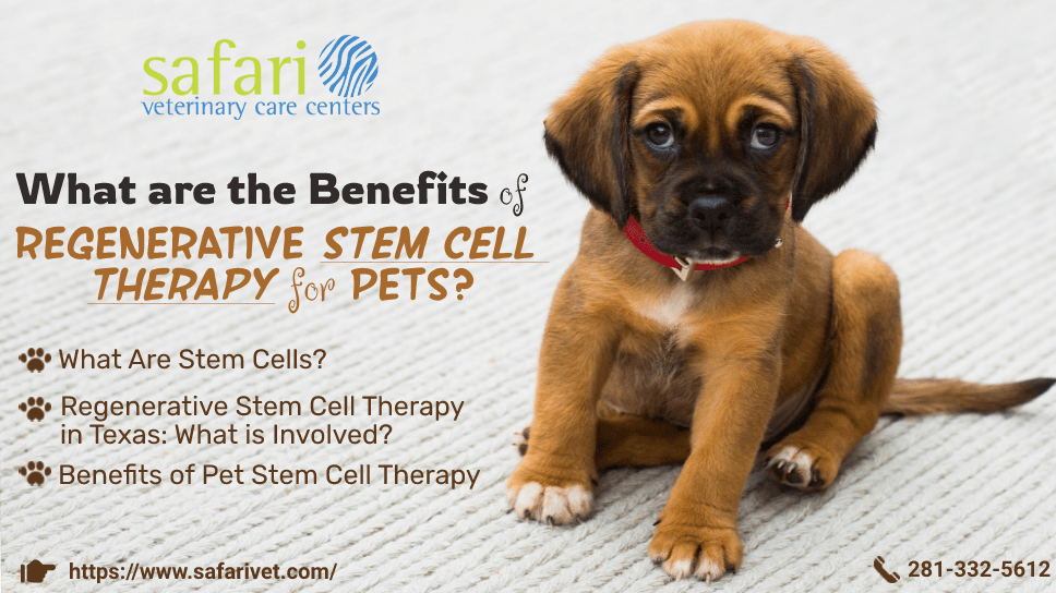 what-are-the-benefits-of-regenerative-stem-cell-therapy-for-pets