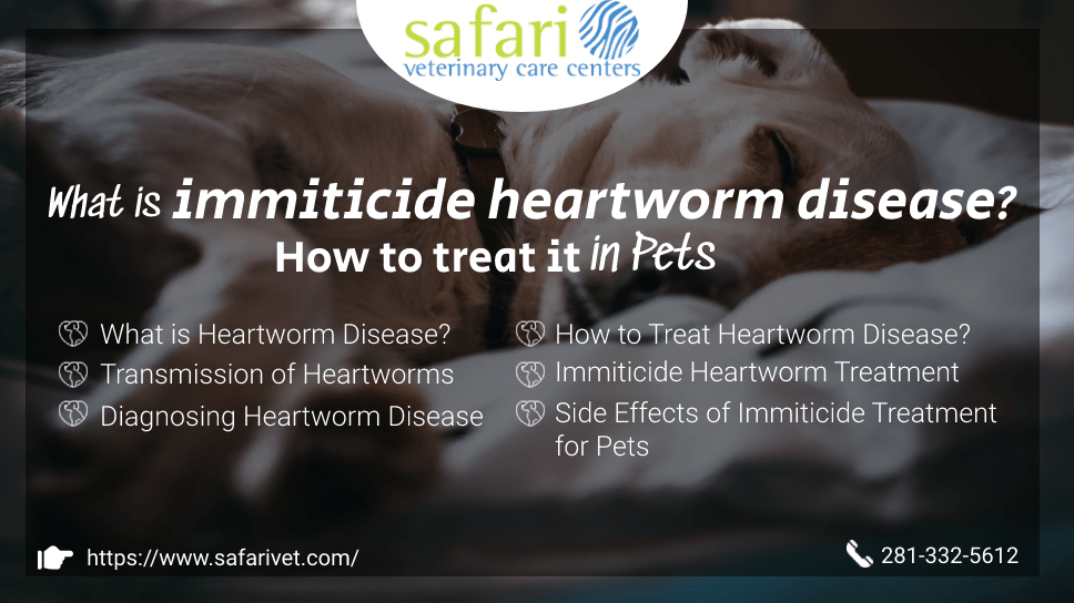 what-is-immiticide-heartworm-disease-how-to-treat-it-in-pets