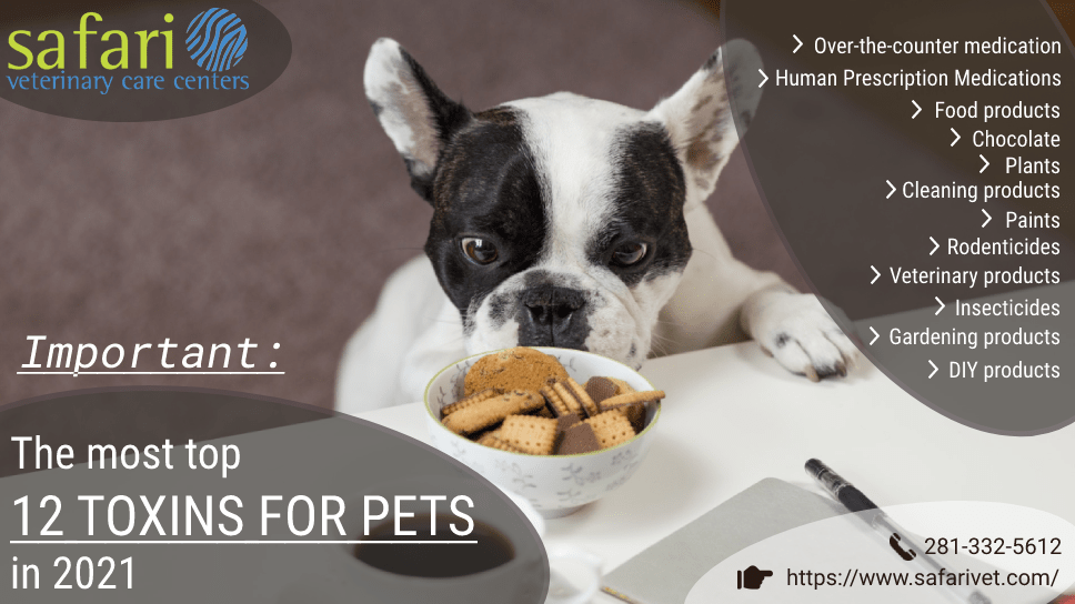 important-the-most-top-12-toxins-for-pets-in-2021