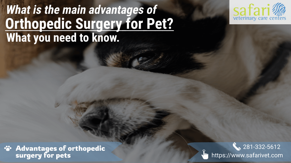 what-is-the-main-advantages-of-orthopedic-surgery-for-pet-what-you-need-to-know