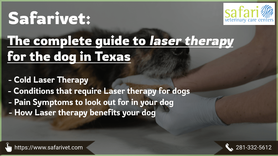 safarivet-the-complete-guide-to-laser-therapy-for-the-dog-in-texas