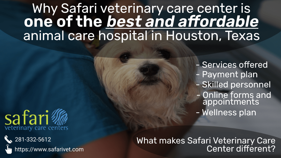 why-safari-veterinary-care-center-is-one-of-the-best-and-affordable-animal-care-hospital-in-houston-texas