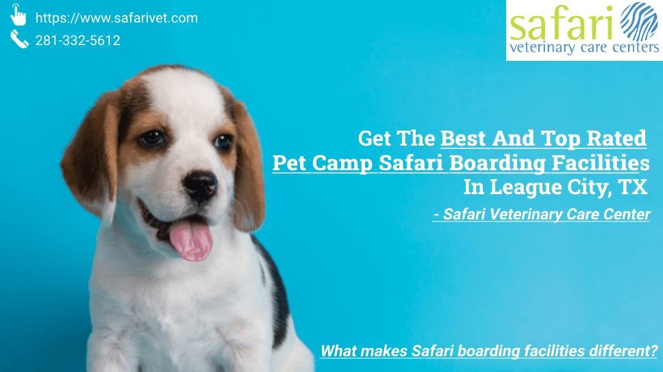 get-the-best-and-top-rated-pet-camp-safari-boarding-facilities-in-league-city-tx-safari-veterinary-care-center