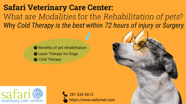 safari-veterinary-care-center-what-are-modalities-for-the-rehabilitation-of-pets-why-cold-therapy-is-the-best-within-72-hours-of-injury-or-surgery