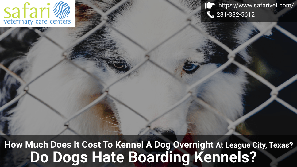 how-much-does-it-cost-to-kennel-a-dog-overnight-at-league-city-texas-do-dogs-hate-boarding-kennels