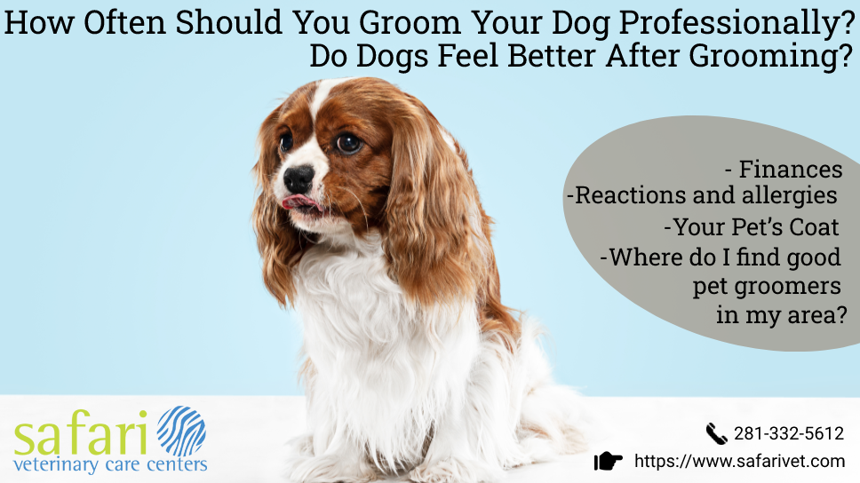 how-often-should-you-groom-your-dog-professionally-do-dogs-feel-better-after-grooming