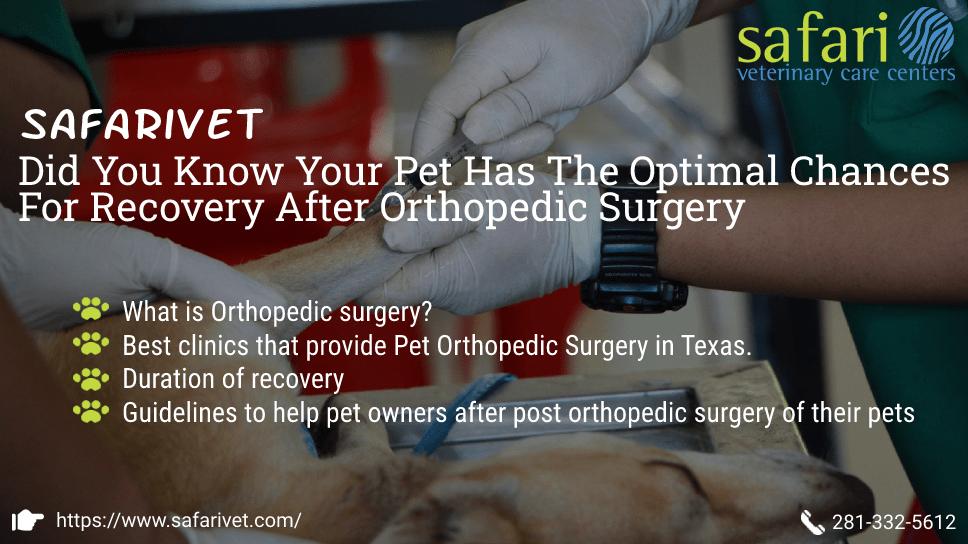 safarivet-did-you-know-your-pet-has-the-optimal-chances-for-recovery-after-orthopedic-surgery-in-houston-tx