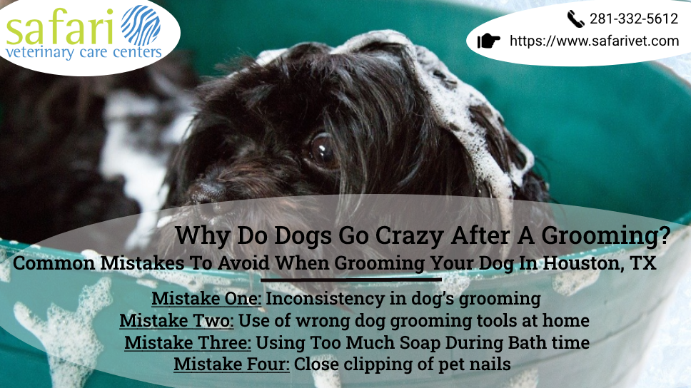 why-do-dogs-go-crazy-after-a-grooming-common-mistakes-to-avoid-when-grooming-your-dog-in-houston-tx