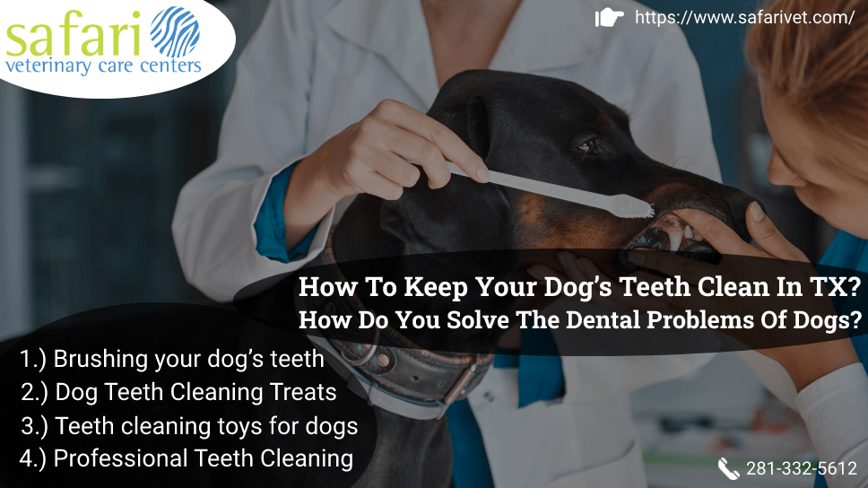 how-to-keep-your-dogs-teeth-clean-in-tx-how-do-you-solve-the-dental-problems-of-dogs