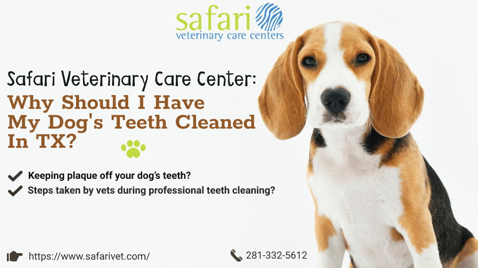 safari-veterinary-care-center-why-should-i-have-my-dogs-teeth-cleaned-in-tx