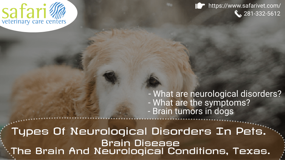 types-of-neurological-disorders-in-pets-brain-disease-the-brain-and-neurological-conditions-texas