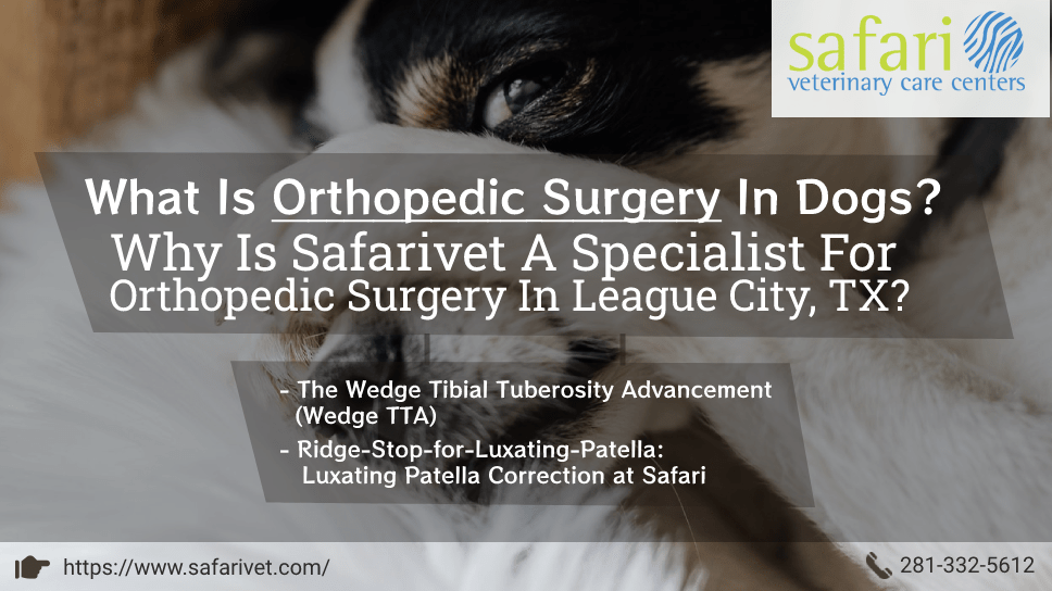 what-is-orthopedic-surgery-in-dogs-why-is-safarivet-a-specialist-for-orthopedic-surgery-in-league-city-tx